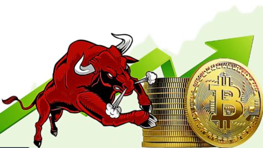 Bitcoin Boga Bay Bilen Kripto Haber